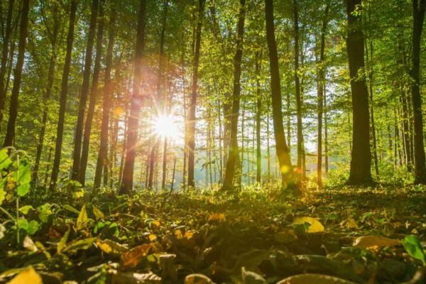 Folk ut i friluft: 10 tips til kommuner