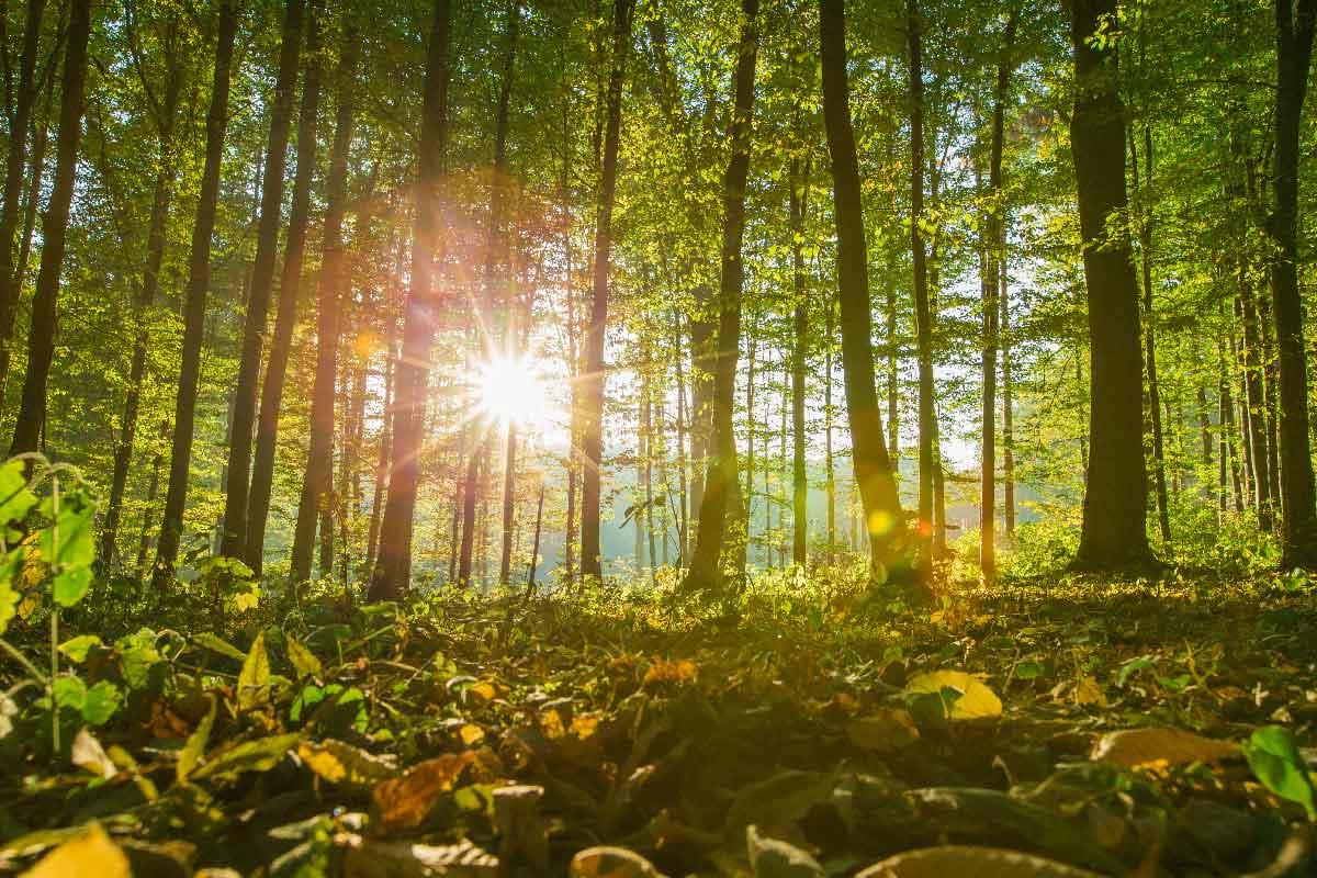 Skog om høsten