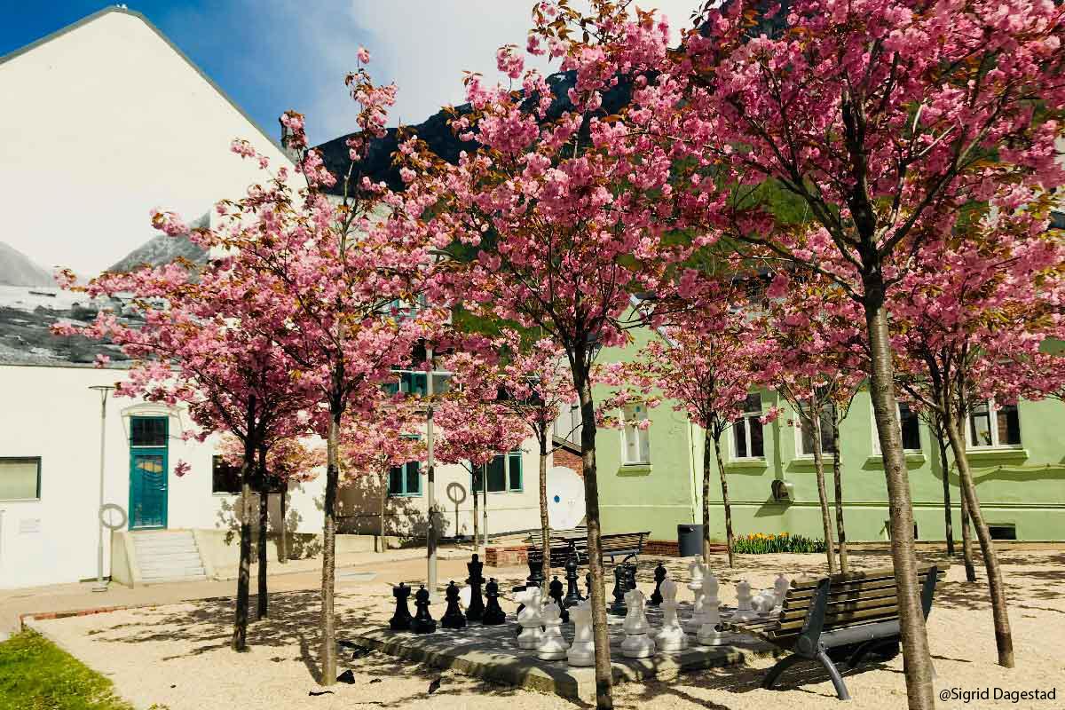 Blomstertrær og sjakkbrett